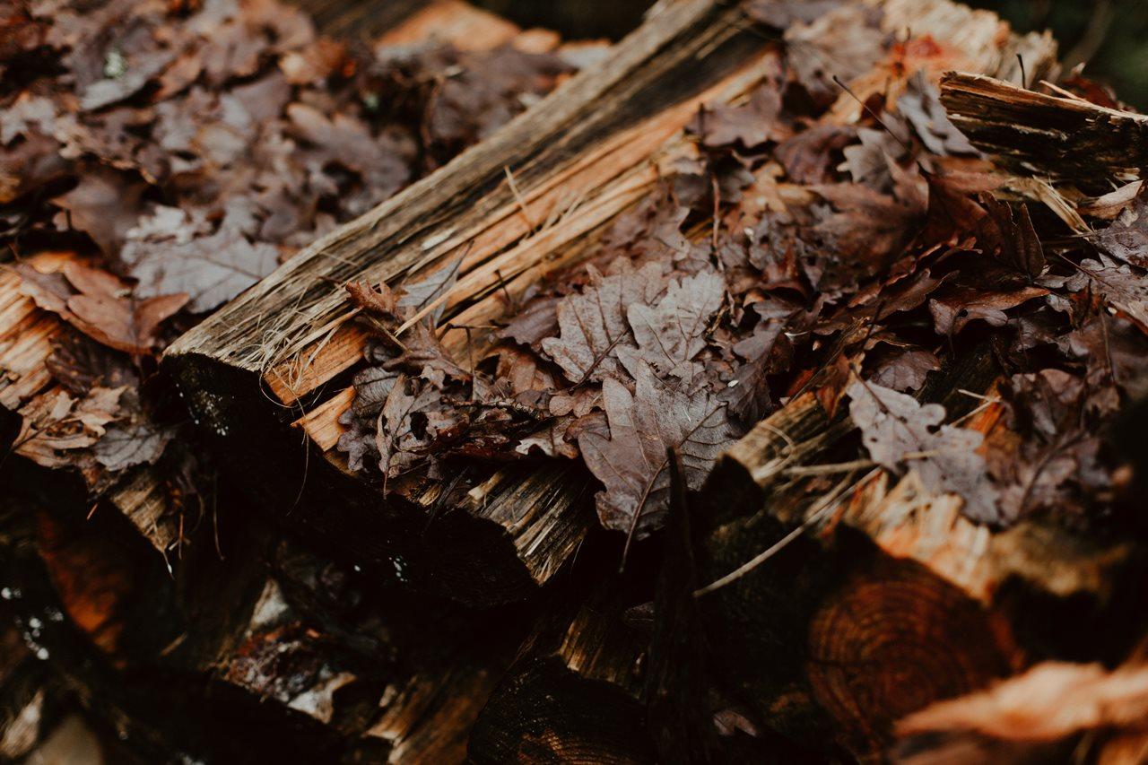 mariage boho bois et feuilles mortes