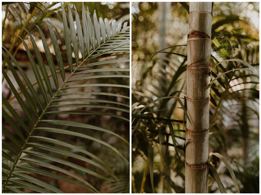 végétation palmier bambou