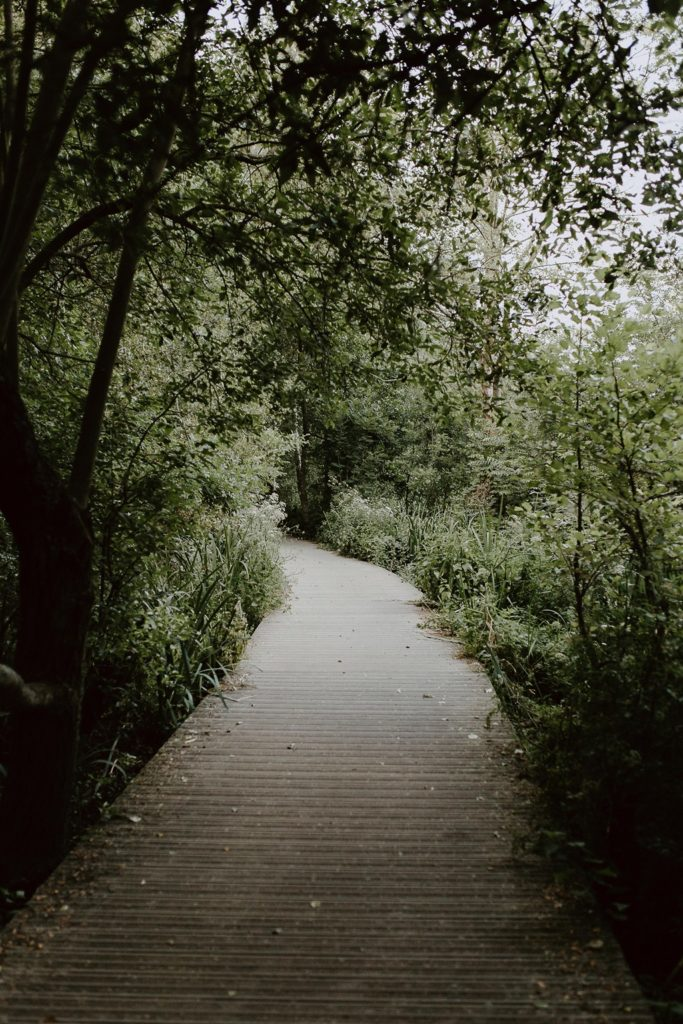 photo nature bord de l'Erdre Nantes
