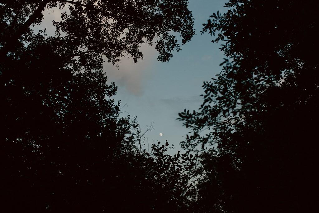 photo lune arbres