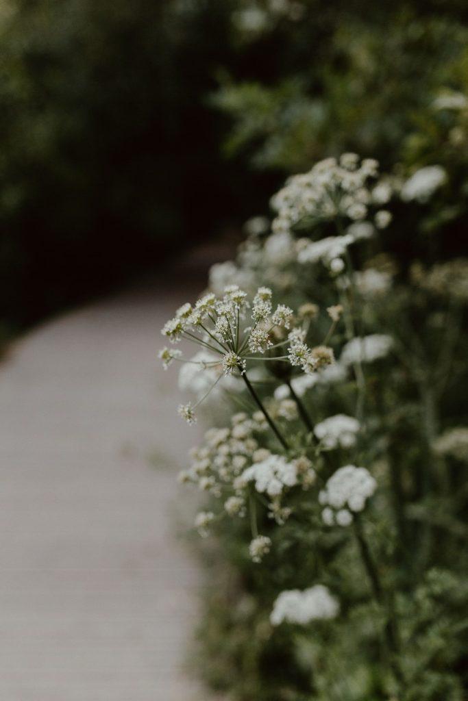 photo fleurs sauvages promenade bord de l'Erdre Nantes